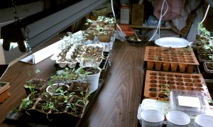 "I use egg cartons, yogurt containers, peat pots, and ""real"" seed starting trays"