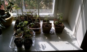 """a reprieve from the shop lights, these guys got to enjoy a few days of """"real"""" sun"""