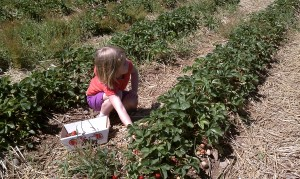 ...or pick your own as I did with my granddaughter